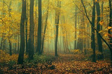 Autumn Walk CLXXXIV.