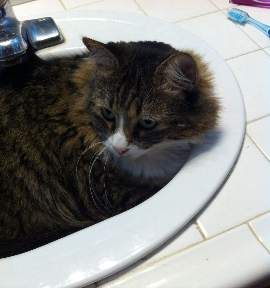 Why is she in the sink halp me by pipa00