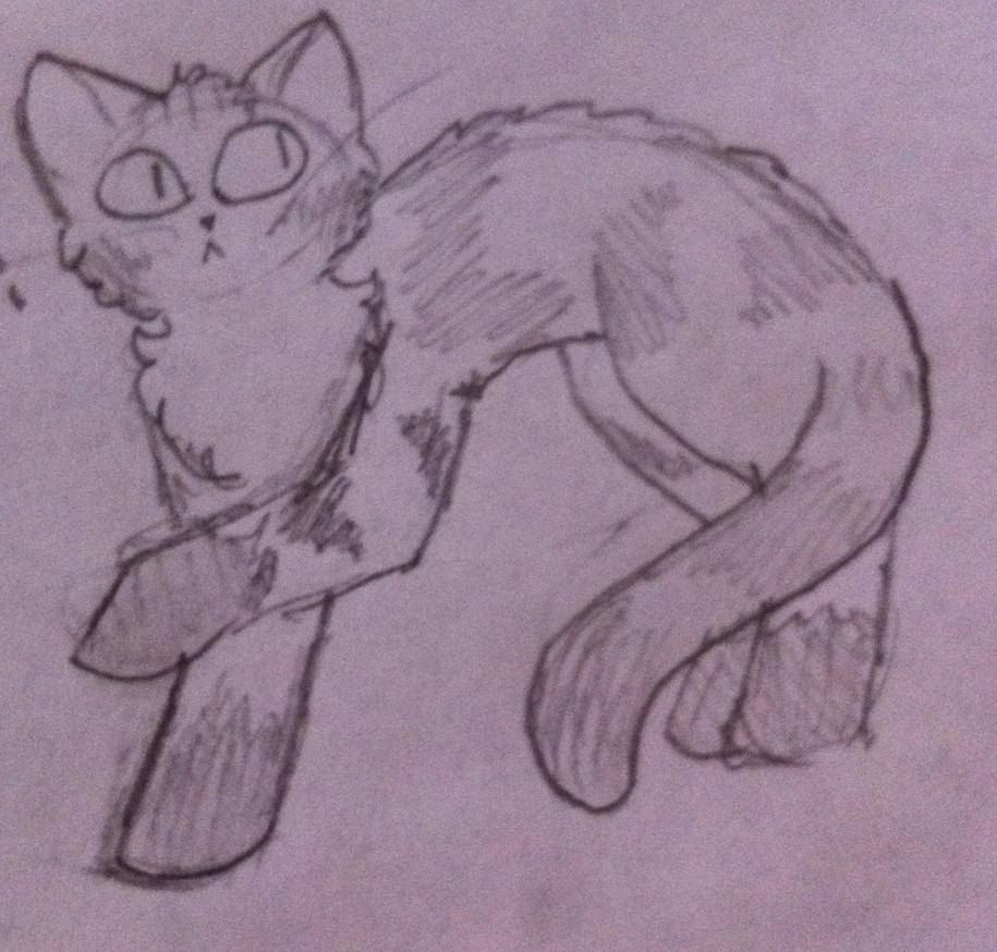 My kit kat by pipa00