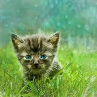 Hello kitty by Nijn88