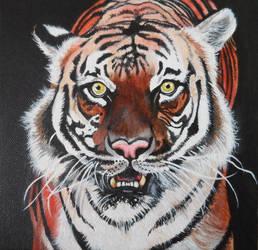 Tiger by Launadoon