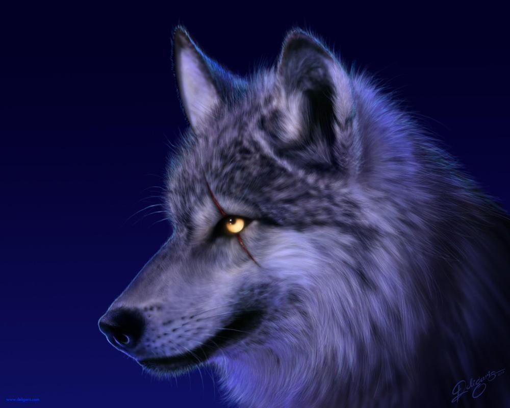 Wolf wallpaper by Deligaris on DeviantArt