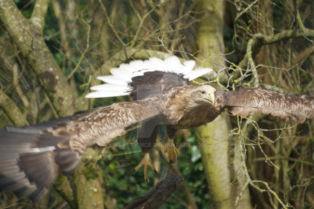 Spread-eagle by beastvince