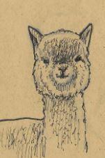 Llama by Erratum27