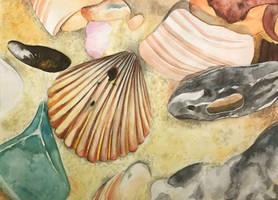 Seashells by FollowTheSkye