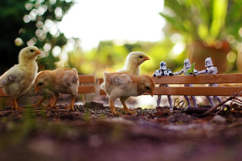 Little Farm by ZahirBatin