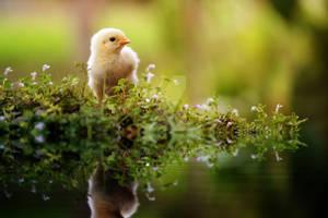 Chicken Little by ZahirBatin