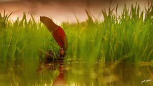 Fishing Spot by ZahirBatin