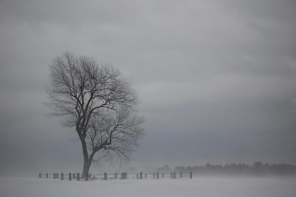 Foggy Graveyard Tree By Diamondofmidnight