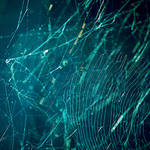 Spider Web Stock 10