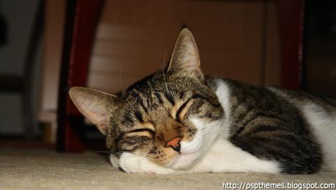 http://fc01.deviantart.net/fs19/f/2007/253/c/1/Sleeping_Cat_by_psptheme.jpg