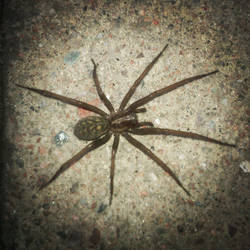 Spider outside my house by Judo95