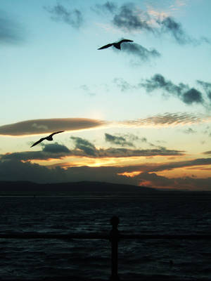 Seagulls by nimroderriver