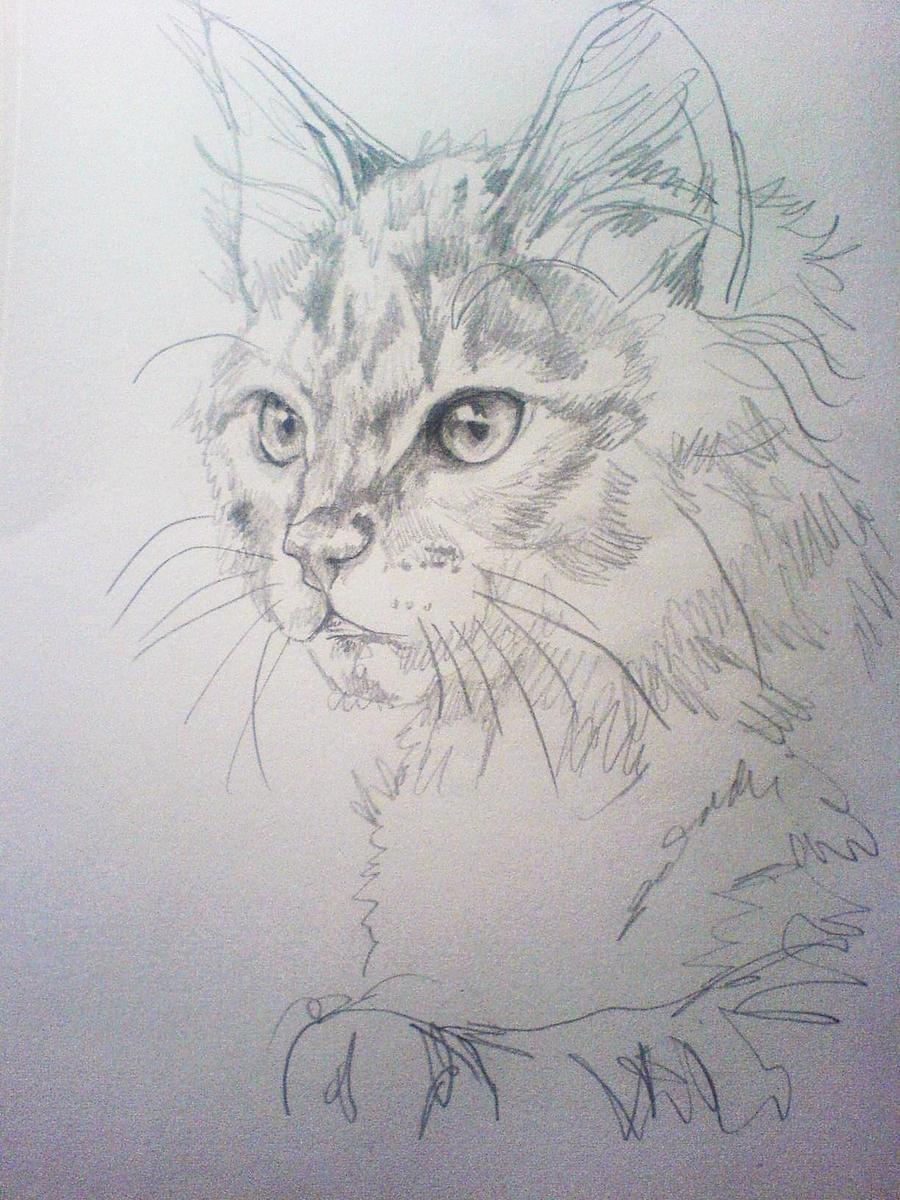 Http Nimroderriver Deviantart Com Art Cat Sketch 1 197874574