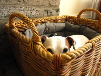 Skye Basket by nimroderriver