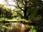 Faery pond by nimroderriver