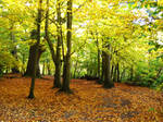 Autumn Woods by nimroderriver