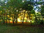 Autumn's Golden Light by nimroderriver