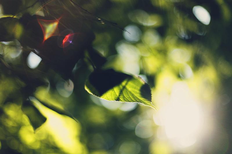 Luminous by Muffinka013