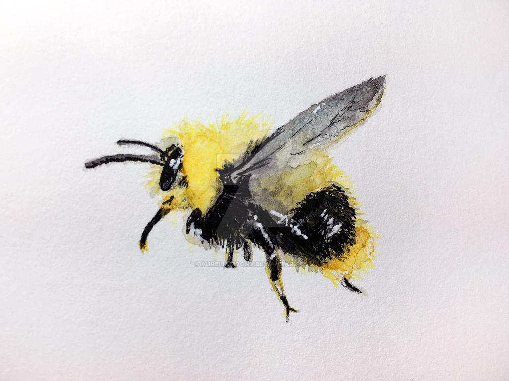 Bumblebee Watercolor and Ink Study by aureliamoonx