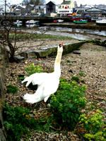 Swan Stock 04 by Aimi-Stock