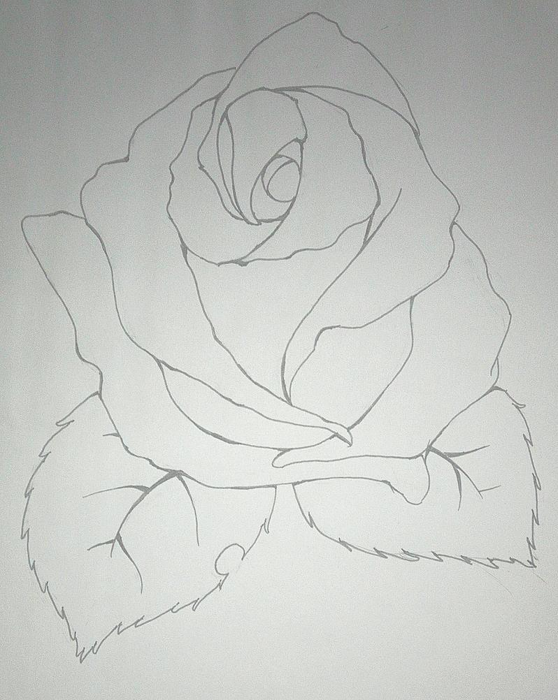 Rose by nemrac01