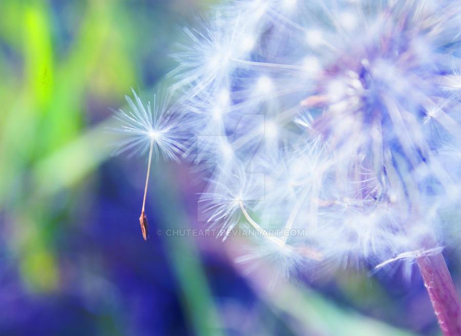 Make a wish.... by chuteart