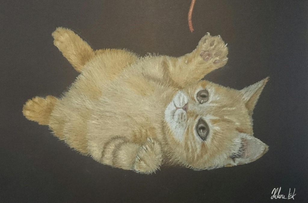 Playing kitten! rawr!