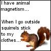 ::Squrrels:: by mimblewimble