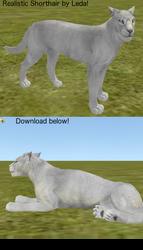 feralheart: free shorthair cat by rookfox
