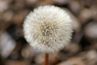 Even Weeds Can Be Beautiful