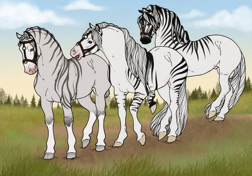A lovely collection of zebra ponies