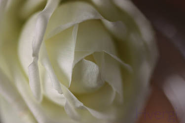 Mystic Rose by Hvergi
