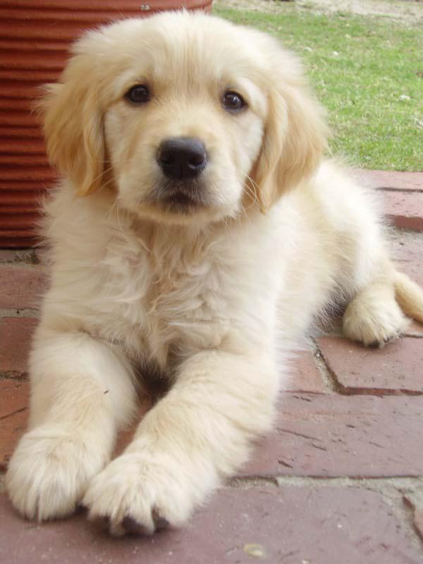 Fluffy Puppy by Lorna-Ann8