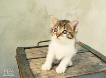 Kitten by IsabellaBLK