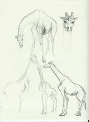 animals by captaincoconutz