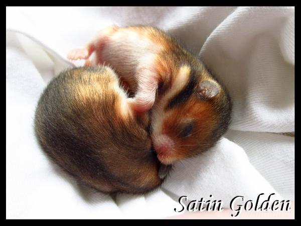 Satin Babies by Sapphiresenthiss