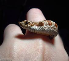 Anaconda by Sapphiresenthiss