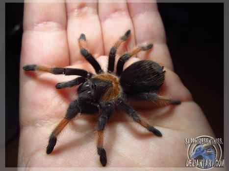 Every Arachnophobic's Fear