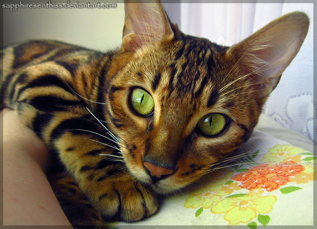 Emerald Eyes by Sapphiresenthiss