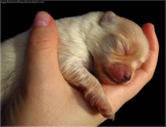 Sleeping Little Princess by Sapphiresenthiss