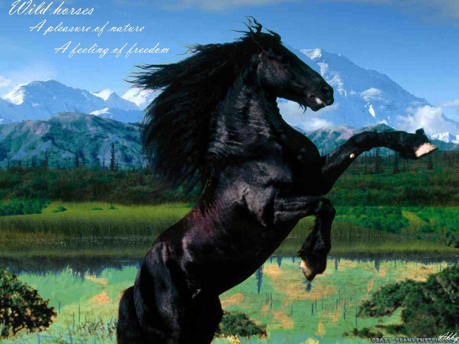 Beautiful Wild Horses Wallpaper Wild Horse Wallpaper by