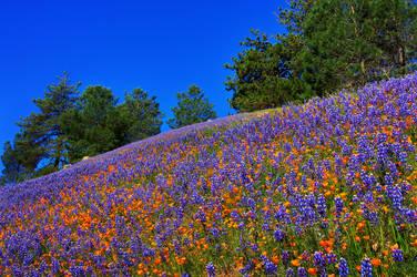 Blueish Orange by ernieleo