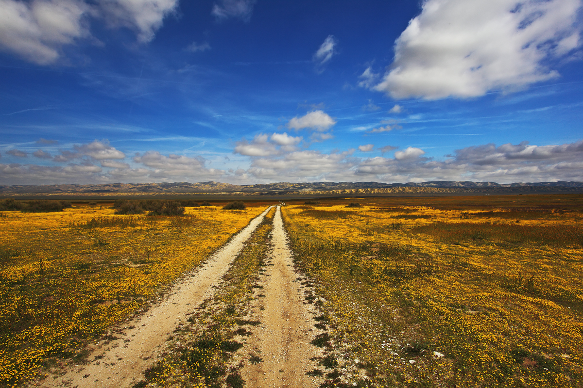 The Long and Winding Road V by ernieleo on DeviantArt
