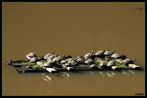 Turtle Barge by ernieleo