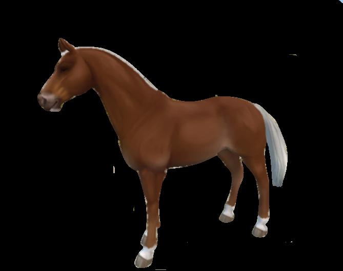 Starter horse 2018 by DarknessAndMadness
