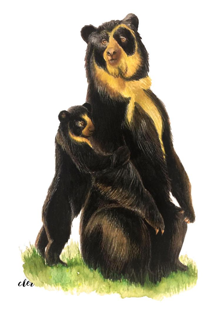 oso de anteojos oso andino by clararuiz91