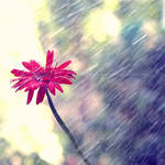 Fresh Summer Rain