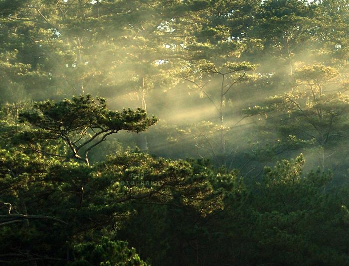 Woodland Magic by BlackJack0919