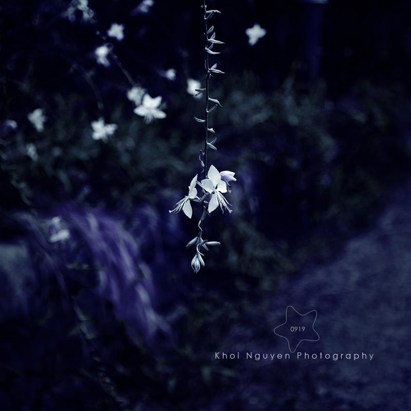 Evening Stars by BlackJack0919